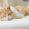 猫好きさんへのプレゼント!人気の猫グッズ&超キュートな雑貨カタログ